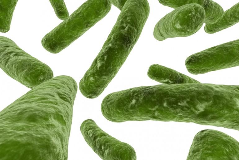 Salmoneliozė